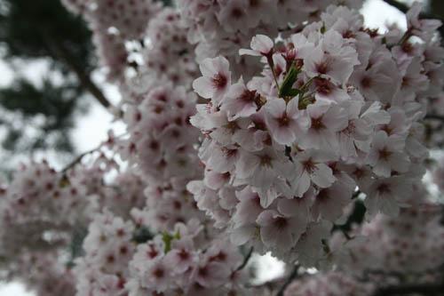 春爛漫_a0099628_529816.jpg