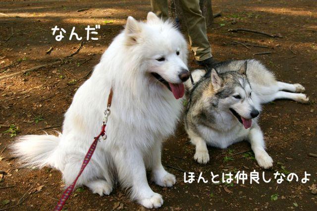 お日さま のち 嵐!?_c0062832_15532049.jpg