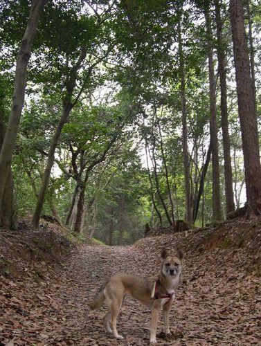 矢田丘陵ハイキング&美犬ルルちゃんとの逢瀬_b0025947_22322736.jpg