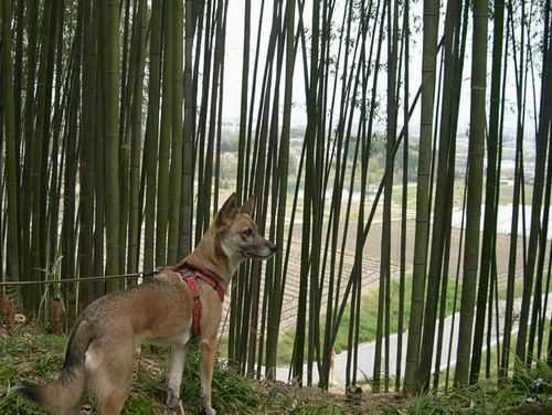 矢田丘陵ハイキング&美犬ルルちゃんとの逢瀬_b0025947_22484373.jpg