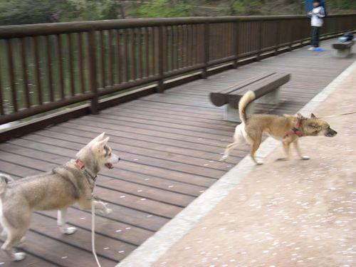 矢田丘陵ハイキング&美犬ルルちゃんとの逢瀬_b0025947_2334775.jpg
