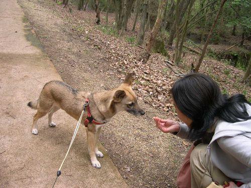 矢田丘陵ハイキング&美犬ルルちゃんとの逢瀬_b0025947_2371114.jpg