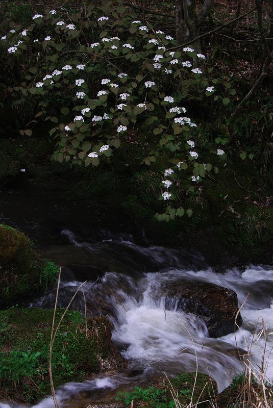 新緑の滝_f0155048_23292819.jpg