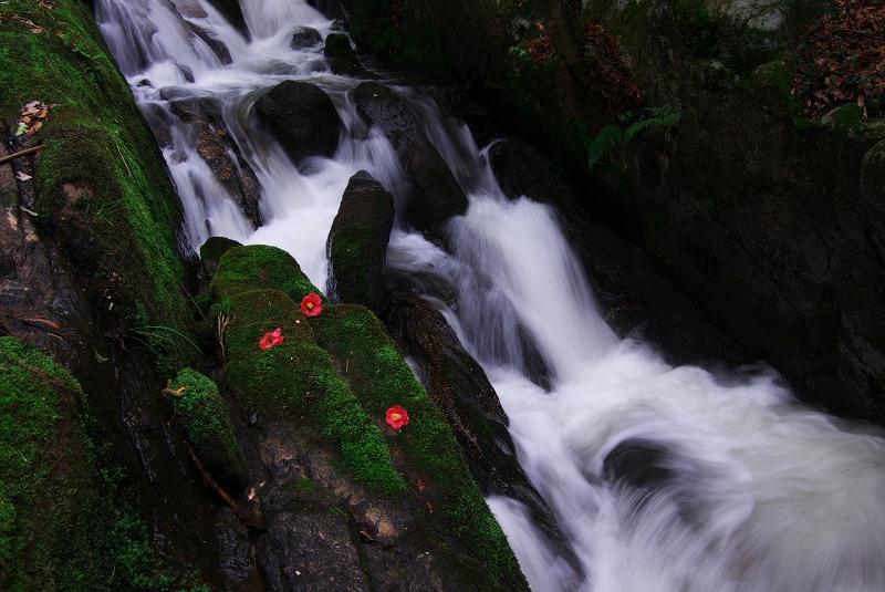 新緑の滝_f0155048_2329754.jpg
