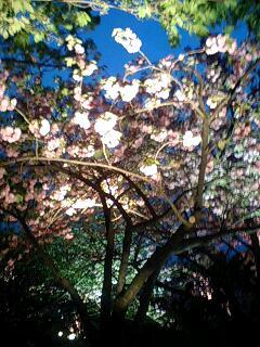 Light Up_a0093054_2025041.jpg