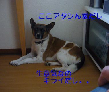 f0087256_2158657.jpg