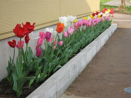 春が来た_e0142373_17183482.jpg