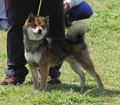 日本犬保存会2008年春の九州連合展(福岡支部)_b0057675_13561163.jpg