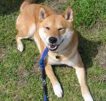 日本犬保存会2008年春の九州連合展(福岡支部)_b0057675_14171071.jpg