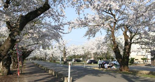 桜と国際教養大学宿舎_e0054299_11531878.jpg