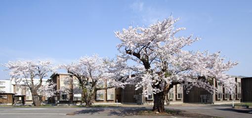 桜と国際教養大学宿舎_e0054299_1184146.jpg