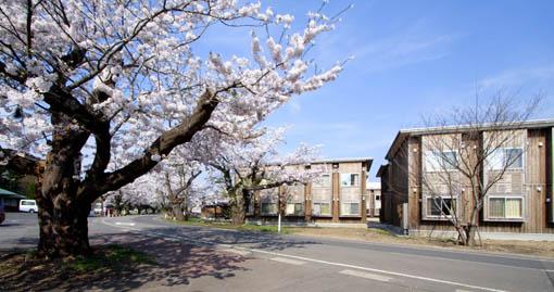 桜と国際教養大学宿舎_e0054299_1185056.jpg