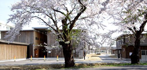 桜と国際教養大学宿舎_e0054299_119154.jpg
