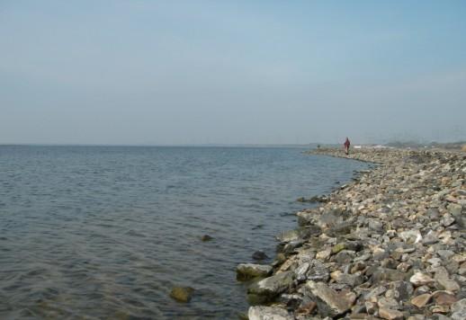 ロッテルダム汽水湖にて (2008年4月末)_c0071305_275440.jpg
