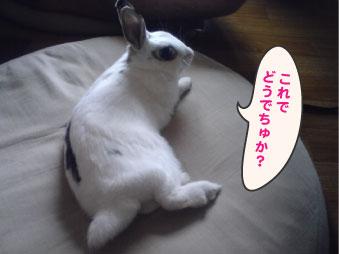 お・・お嬢様っ!!!_c0155208_19532486.jpg