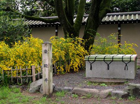 京都御苑 やまぶき_e0048413_21451989.jpg
