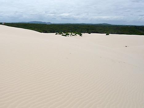 エコ・ツアー(中編) 大砂丘で砂すべり_c0053520_11482171.jpg