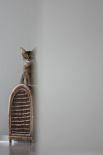 [猫的]トリミングの話その2_e0090124_8253125.jpg