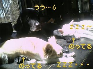 f0148927_1824393.jpg