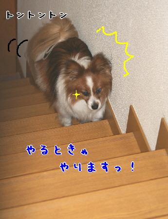 d0013149_842881.jpg