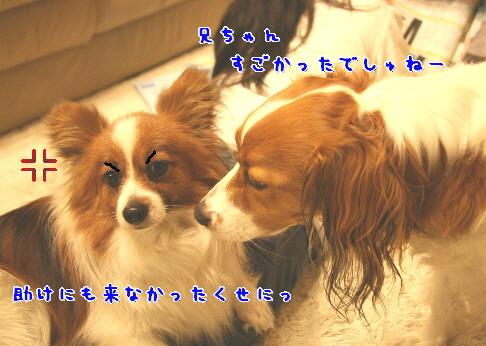 d0013149_854112.jpg