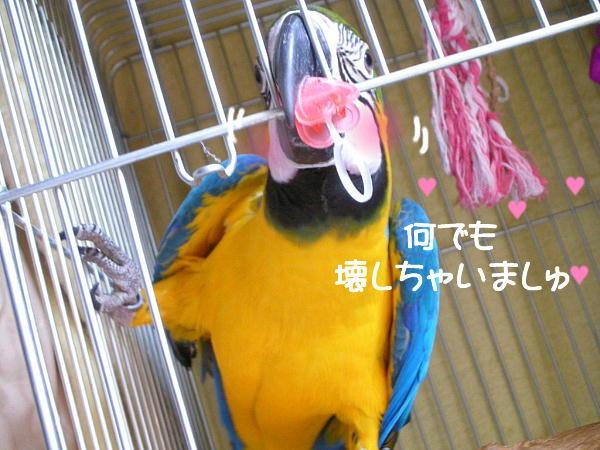 f0132055_9382072.jpg