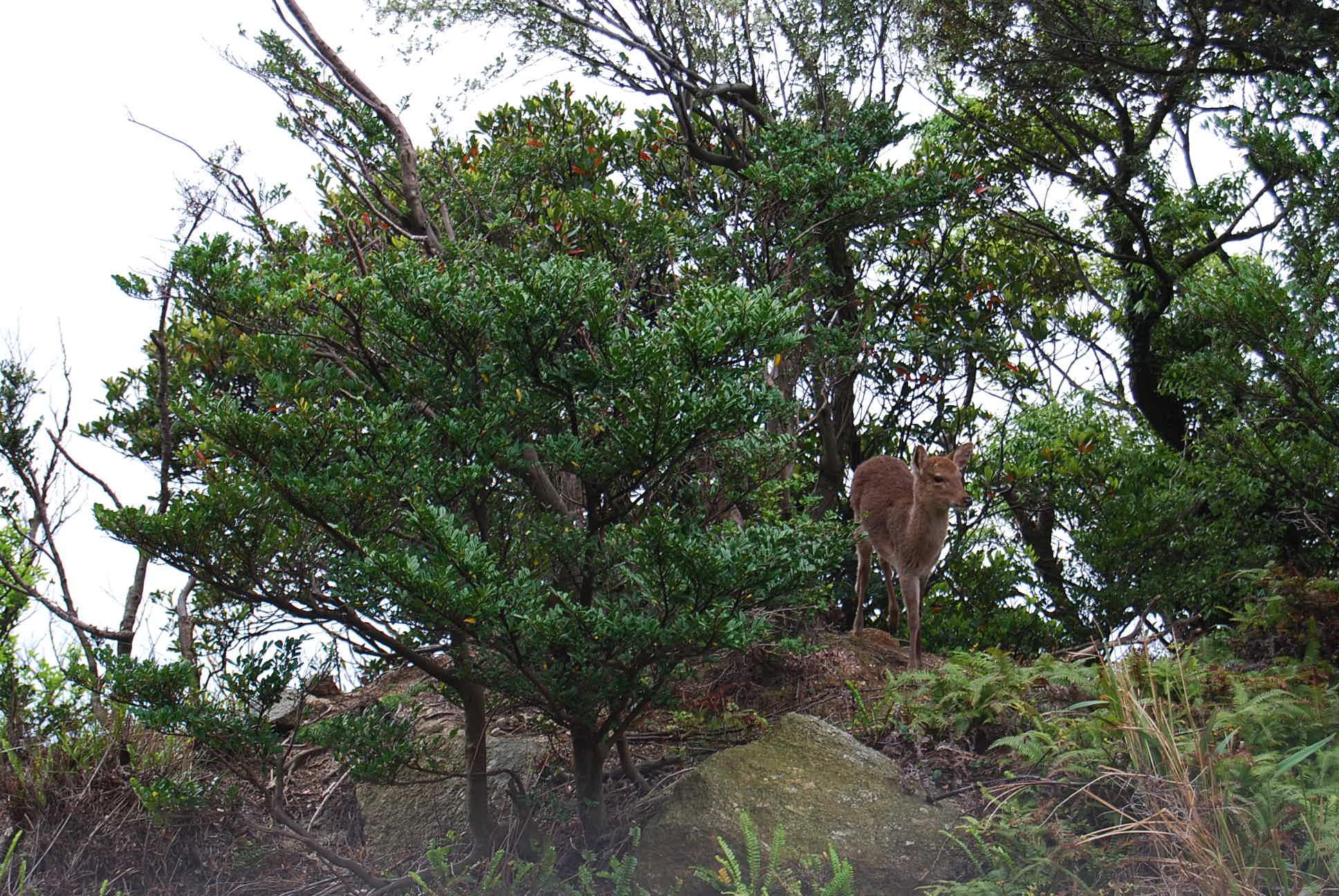 屋久島の旅 2日目_e0142956_13305777.jpg