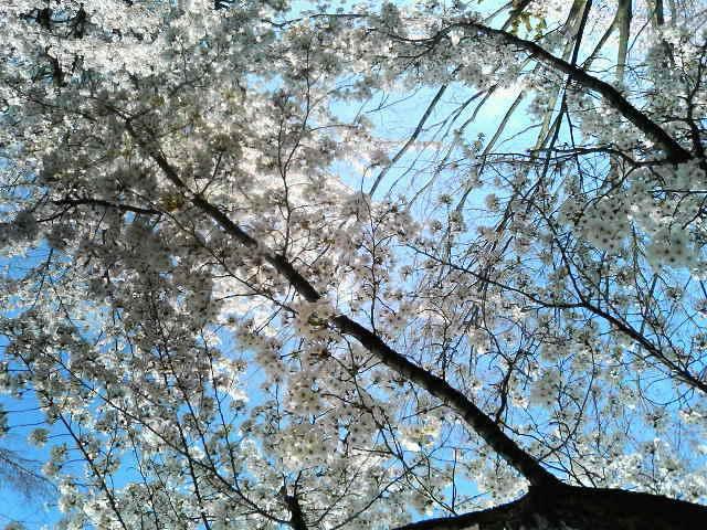 長野の春は_b0096957_2152366.jpg