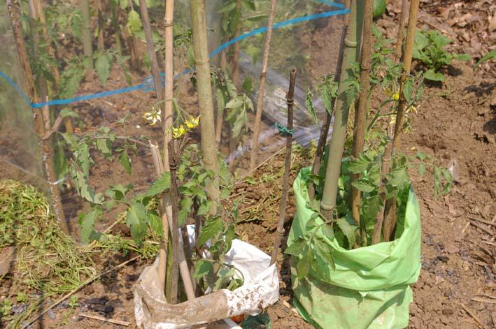 キュウリの苗は4・22、トマトは4・19に植え付け完了_c0014967_21382217.jpg