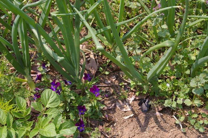 キュウリの苗は4・22、トマトは4・19に植え付け完了_c0014967_21411971.jpg