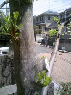 ツバメが2羽、巣に帰ってきました ^(^-^)^_f0061067_2232863.jpg