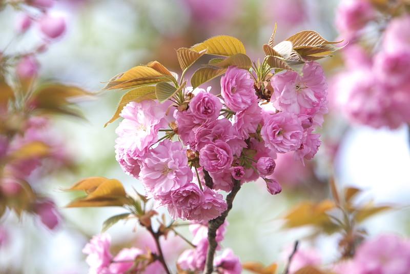 花、無常_d0125872_22125973.jpg