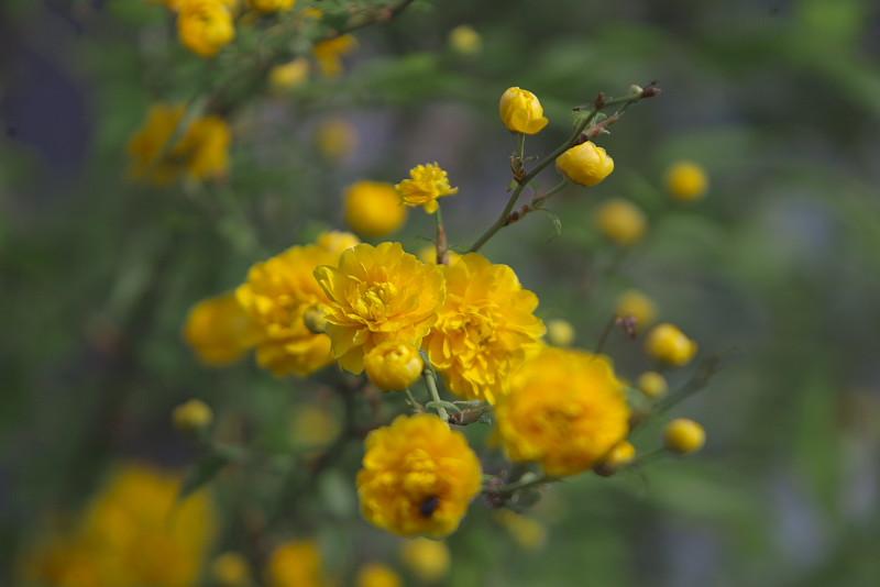 花、無常_d0125872_22225321.jpg