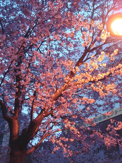 春です。_d0107785_13194817.jpg