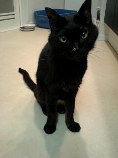 miyaちゃんちの猫ちゃん_f0144003_22224827.jpg