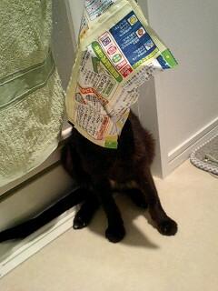 miyaちゃんちの猫ちゃん_f0144003_2223785.jpg