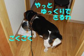 d0104209_2363471.jpg