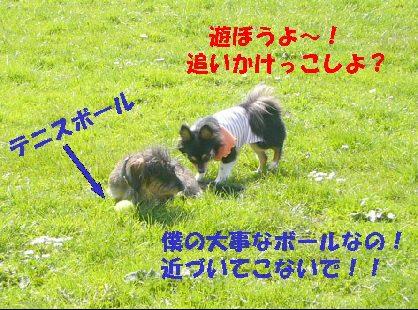 d0089861_2011611.jpg