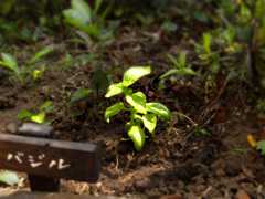 庭しごと2008_c0110869_1431224.jpg