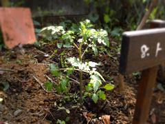 庭しごと2008_c0110869_14314450.jpg