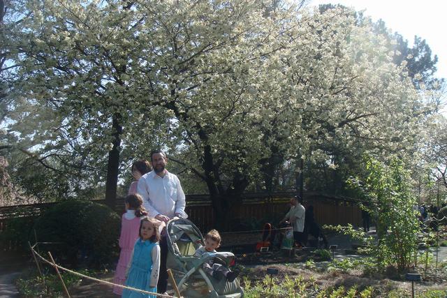 BROOKLYN BOTANIC GARDENの桜 _d0100880_19192359.jpg