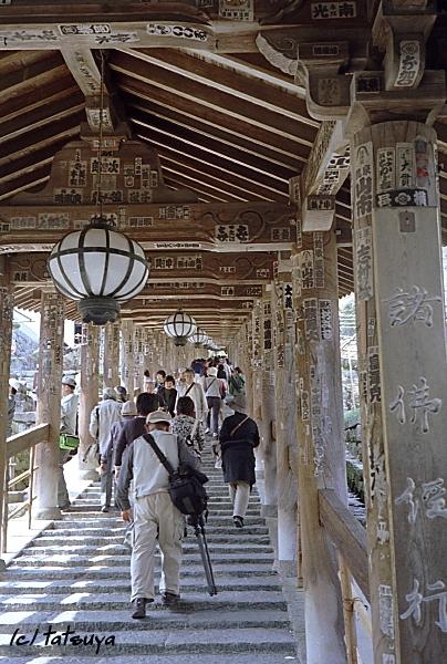 Apr.  23  (wed)  長谷寺の桜 終_f0139991_21491140.jpg