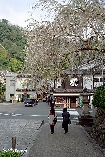 Apr.  23  (wed)  長谷寺の桜 終_f0139991_21492835.jpg