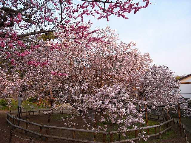 道南の花と山と温泉_f0138096_23503535.jpg