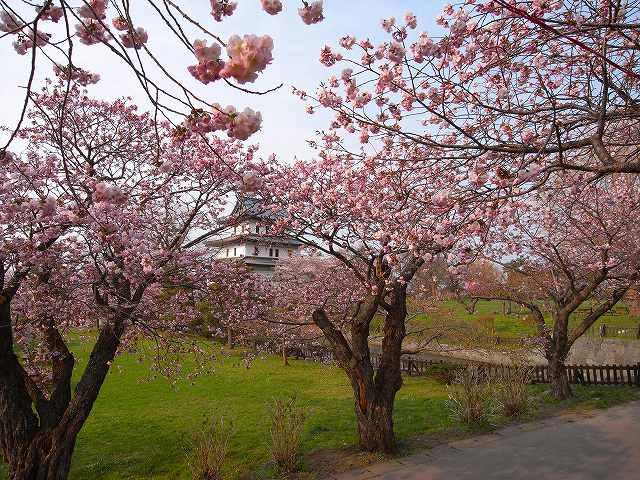 道南の花と山と温泉_f0138096_2350785.jpg
