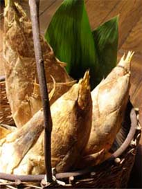 Bamboo shoot_d0136461_1135144.jpg
