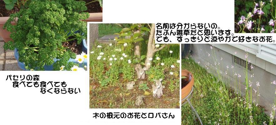 f0101679_813773.jpg
