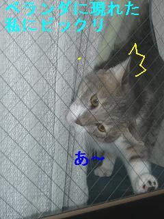 b0112380_11482258.jpg