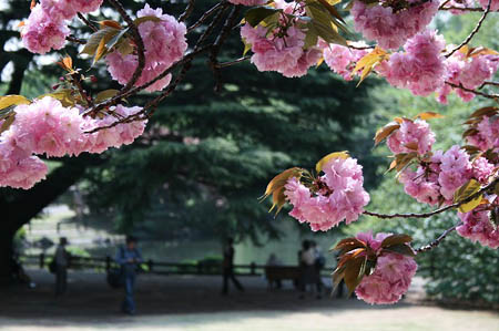 新宿御苑にて_f0030085_1137370.jpg