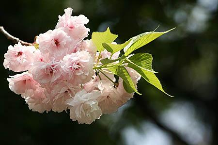 新宿御苑にて_f0030085_11395284.jpg